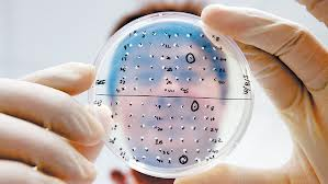 Research at the Novartis Institute for Tropical Diseases: Bloomberg / www.ft.com